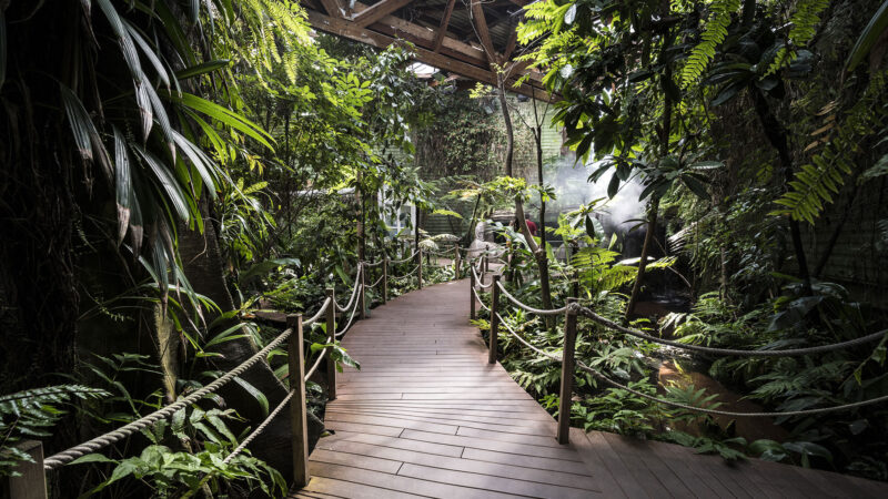 Serre tropicale, pavillon Tropical - © Océanopolis